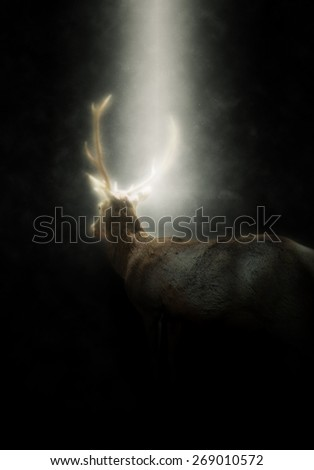 Rear View of Buck Male Deer with Antlers Walking Away from Camera Illuminated in Bright Spotlight with Dark Background - stock photo