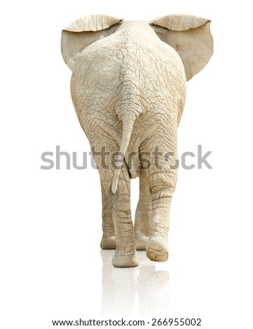 rear view of elephant On White Background