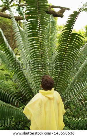 Rear view of young boy looking at large fern in forest during field trip - stock photo