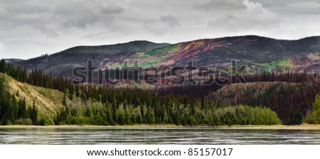 Recently burnt boreal forest in the Yukon River valley, Yukon Territory, Canada. - stock photo