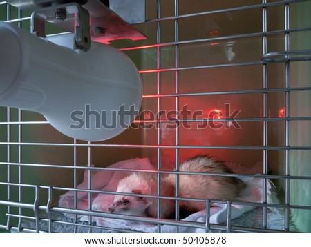Recovery with a ferret - stock photo