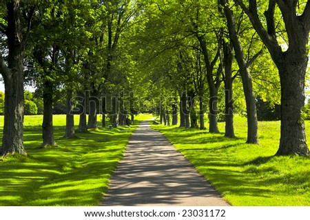 Recreational path in green park lined up with trees - stock photo
