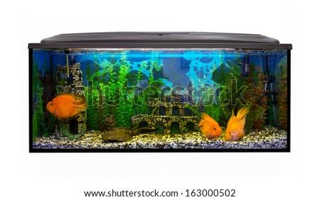 Rectangular beautiful aquarium with sea fish on a white background - stock photo