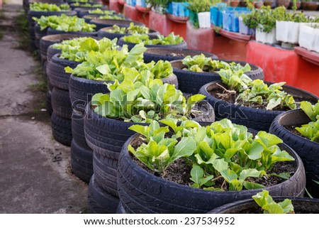 recycle of tire used in organic vegetable farm - stock photo