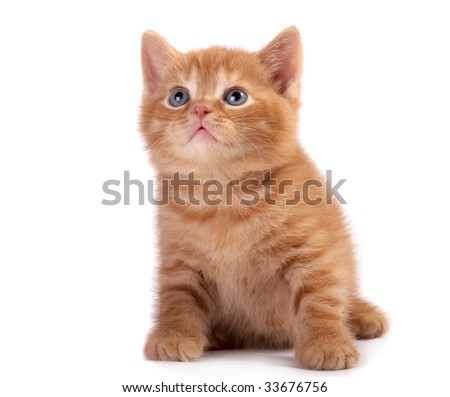 Red a kitten on a white background - stock photo
