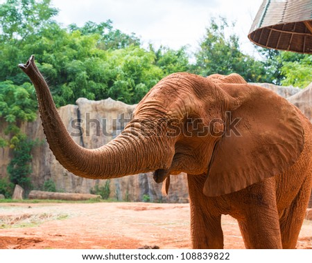 Red african elephant - stock photo