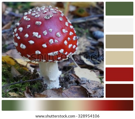 Red Amanita Fly-Agaric Mushroom, Leaves In Forest. Palette With Complimentary Colour Swatches. - stock photo