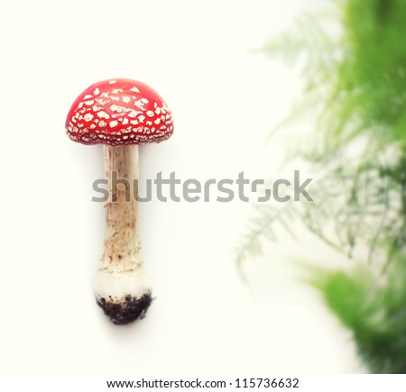 Red Amanita. Shallow depth of field - stock photo