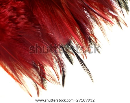 red and black plume isolated on white background