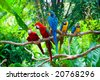Red and blue macaw resting on branches of tree - stock photo