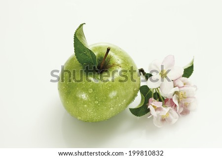 Red and green apples and apple blossom, elevated view - stock photo