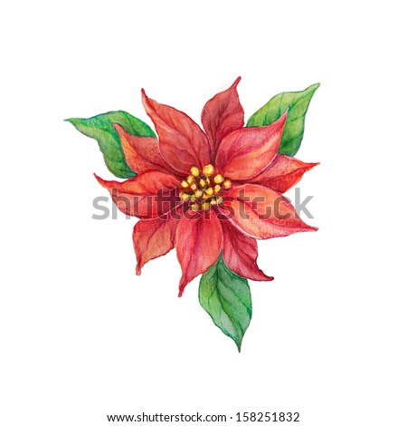 Red and green Christmas poinsettia  isolated on white background, watercolor flower - stock photo