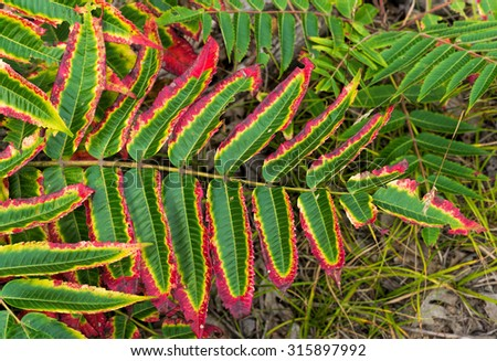 Red and green fern leaves - stock photo