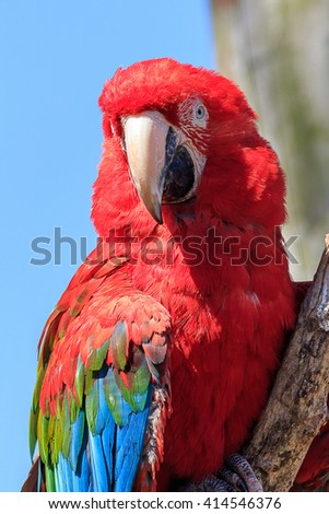 Red and green macaw perched on a branch - stock photo