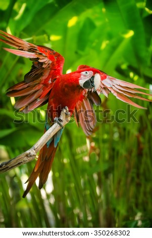 Red-and-green macaw sitting on branch over blue sky - stock photo