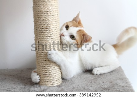 Red and white cat and scratching post
