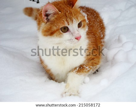 red and white cat on the white snow - stock photo