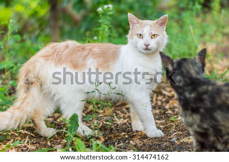 Red and white dirty cat with bright yellow eyes, stands sideways on the ground in the grass, peeking through another gray one