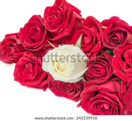 Red and white roses on white background. - stock photo
