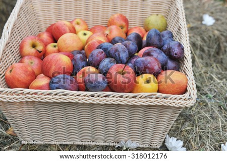 Red and yellow apples and plums in a braided, traditional looking basket. - stock photo