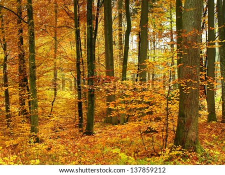 Red and yellow autumn forest