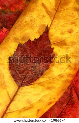 red and yellow autumn leaves - stock photo