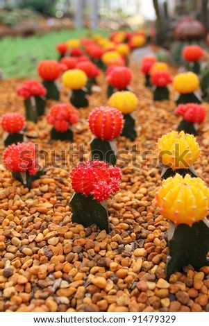 Red and Yellow Cactus - stock photo