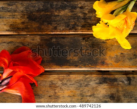 Red and Yellow Canna flower, wood background