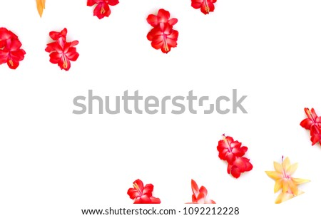 Red yellow flowers cactuses schlumbergera truncata stock photo edit red and yellow flowers cactuses schlumbergera truncata common names christmas cactus thanksgiving mightylinksfo