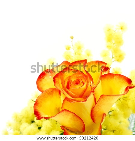 Red and yellow rose arrangement photographed on white background - stock photo