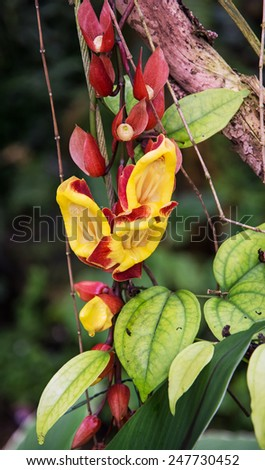 Red and yellow tropical flowers. Natural background. Jungle theme. - stock photo