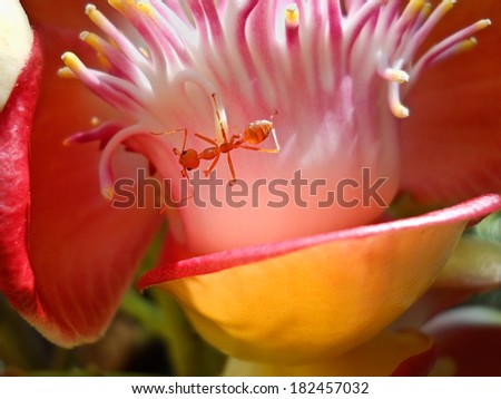 red ant in the nature - stock photo