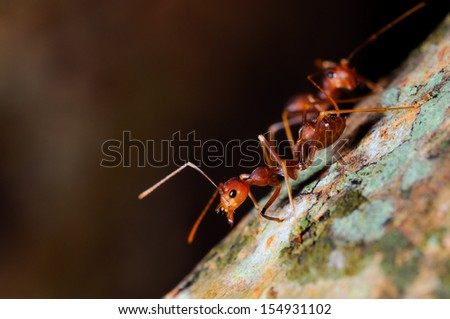 red ant on natural - stock photo