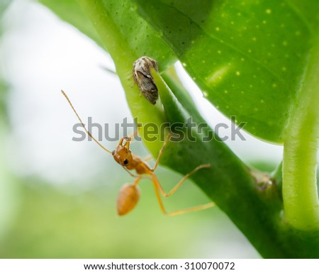 red ant with tree and leaf - stock photo