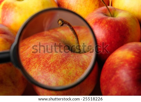 Red apples with magnifying glass