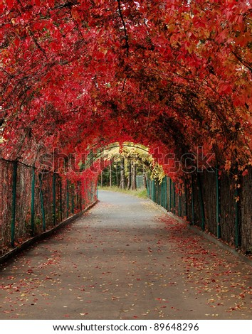 red autumn alley - stock photo