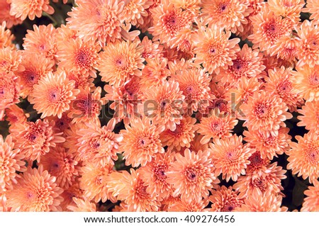 red autumn flowers - stock photo