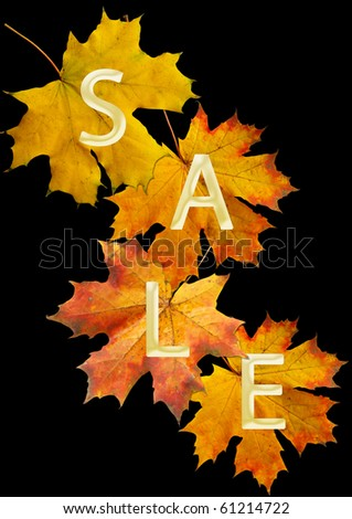 red autumn leaf for sale - stock photo