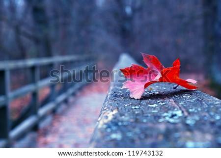 Red autumn leaf on old wooden bridge in autumn - stock photo