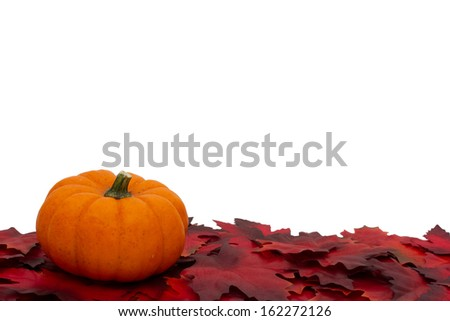 Red Autumn Leaves and a Pumpkin Background isolated on white for copy-space, Autumn Time Background - stock photo