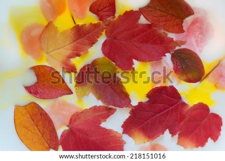 Red autumn leaves in white liquid with blots of bright paints. Elegant abstract autumn background. - stock photo