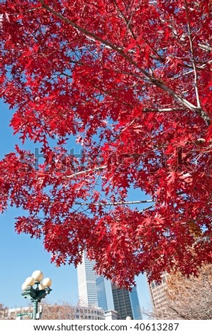 Red autumn tree with urban background - stock photo