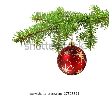 Red ball hanging on a green christmas tree branch, isolated - stock photo