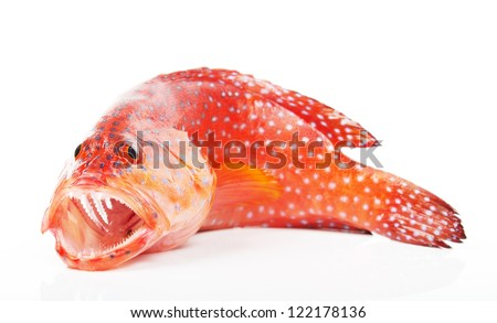 Red-banded grouper