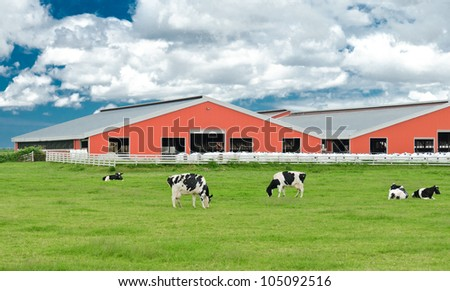Red barns on the farm lands with some cows pasturing  on the lawn - stock photo