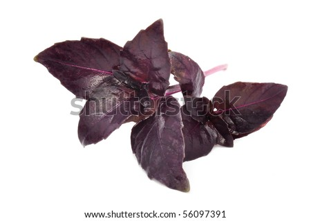 Red Basil - stock photo