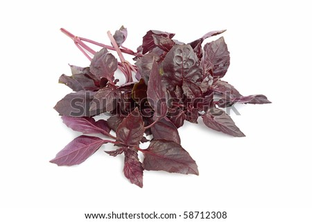 Red basil leaves in a bunch on white background - stock photo