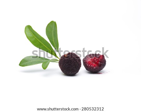 Red Bayberry - stock photo