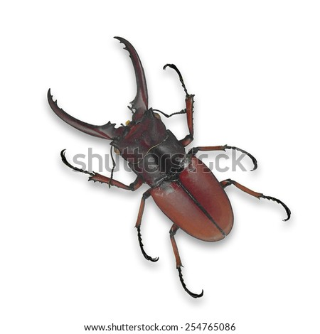 Red beetle isolated on white background - stock photo