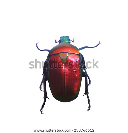red beetle isolated, Set of realistic colorful tropical beetle and insect, zoology,wild ,entomology, one alive exotic butterfly with beautiful wing collection ,insect animal stuff icon